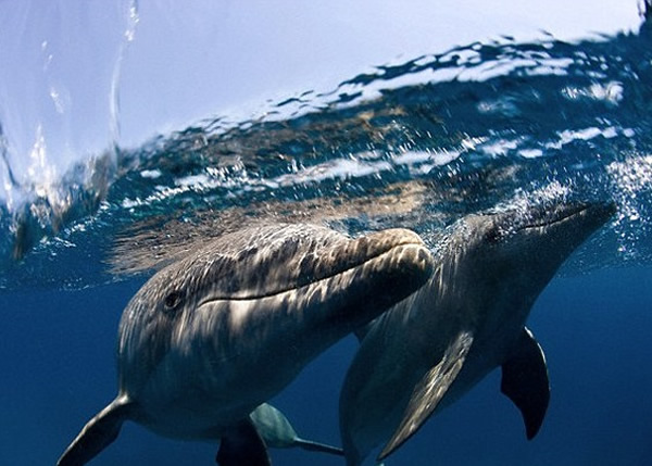 专家建议制定观赏船与海洋生物的最短距离