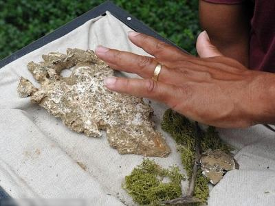 美国密西西比州维克斯堡市传出发现大脚怪