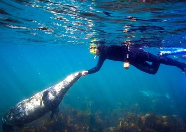 海豹仔不怕生保,主动与拉伊接触。