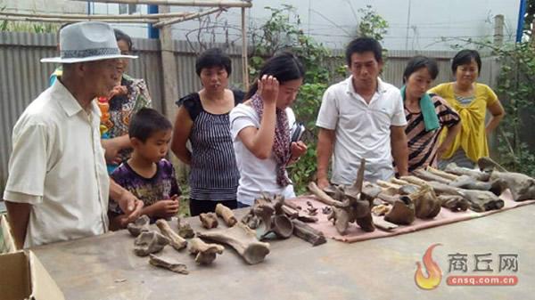 商丘市柘城县村民从50米地下挖出大量动物骨骼化石