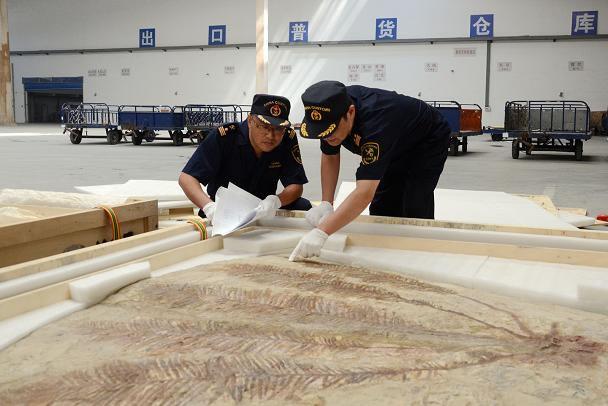 沈阳海关关员查验出境参展的古生物化石