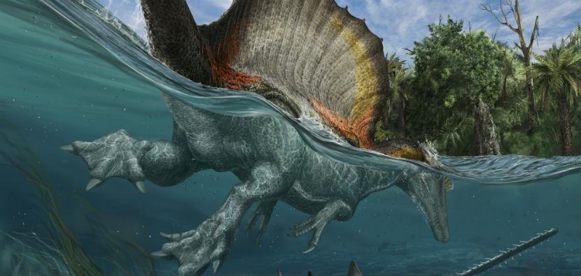 新研究证实棘龙大部分时间在水中生活