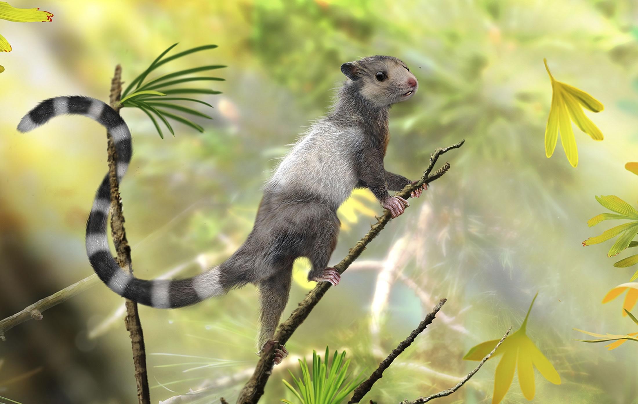新近在辽宁省发现的3种大小与松鼠相当的小型动物化石显示哺乳动物早在大约2亿年前便已经出现在地球上。这是一张化石复原图,展示其中一种哺乳动物:宋氏仙兽生前可能的样