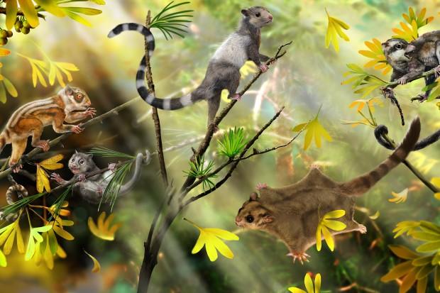 复原想象图,展示最新发现并命名的3种生活在侏罗纪森林中的早期哺乳动物。