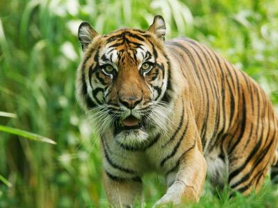 ������Ȼ����(WWF)���?�������������桷��ȫ��Ұ����40�����������
