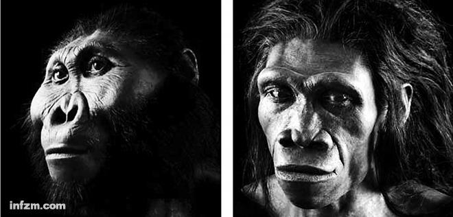 """石器时代的饮食结构:我们的远亲""""鲍氏傍人""""(Paranthropusboseii)(左)住在草原上。从牙齿化石上的分子残留物来看,""""鲍氏傍人""""的主要食物是草。而"""