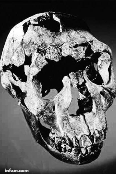 年轻男性匠人(Homo ergaster)的头骨化石,发现于肯尼亚图尔卡纳,距今160万年。 (南方周末资料图/图)