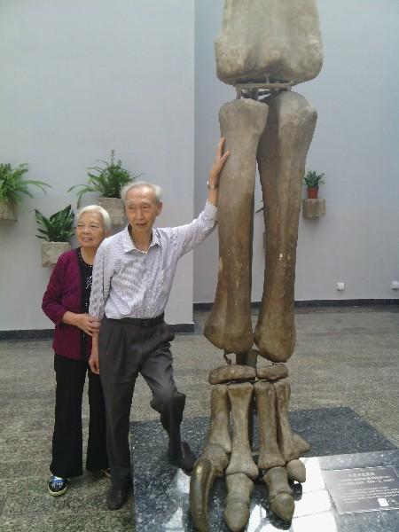 到自贡恐龙博物馆亲手摸1.6亿年前的恐龙化石