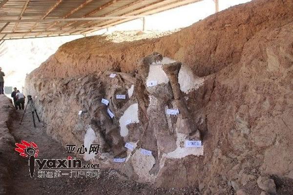 中国首个古生物化石保护研究中心在新疆鄯善成立