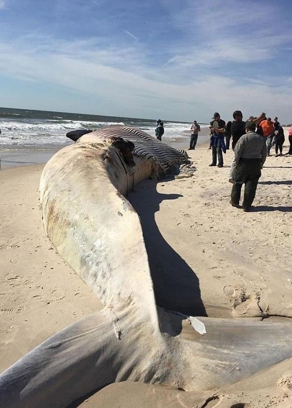 长须鲸尸体吸引大批民众围观