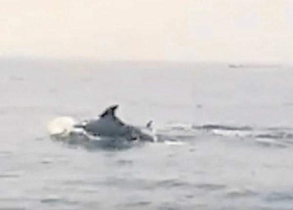 马来西亚华裔少年出海遇上海豚群