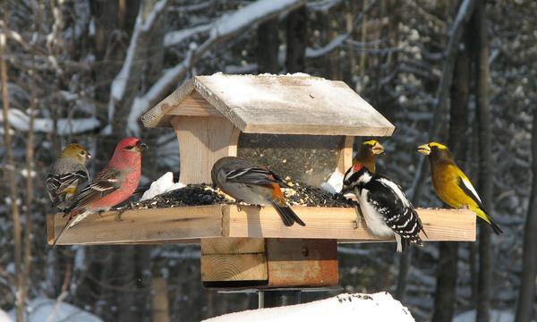 鸟类过冬模式正在发生变化
