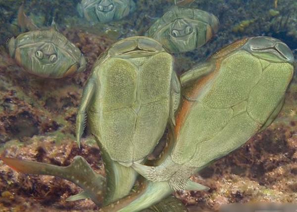 小肢鱼或是首种透过性交交配的生物,图为小肢鱼交配的模拟图片。