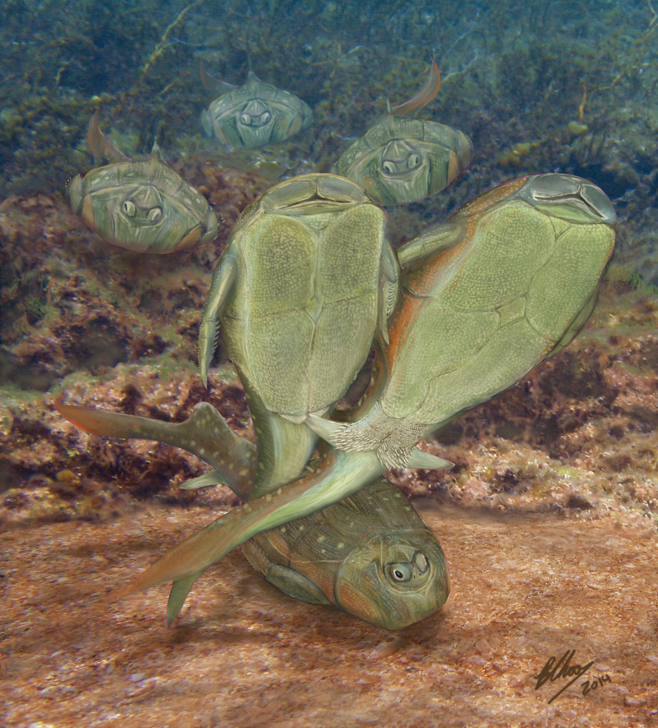 小肢鱼生态复原,示雌雄鱼交配场景