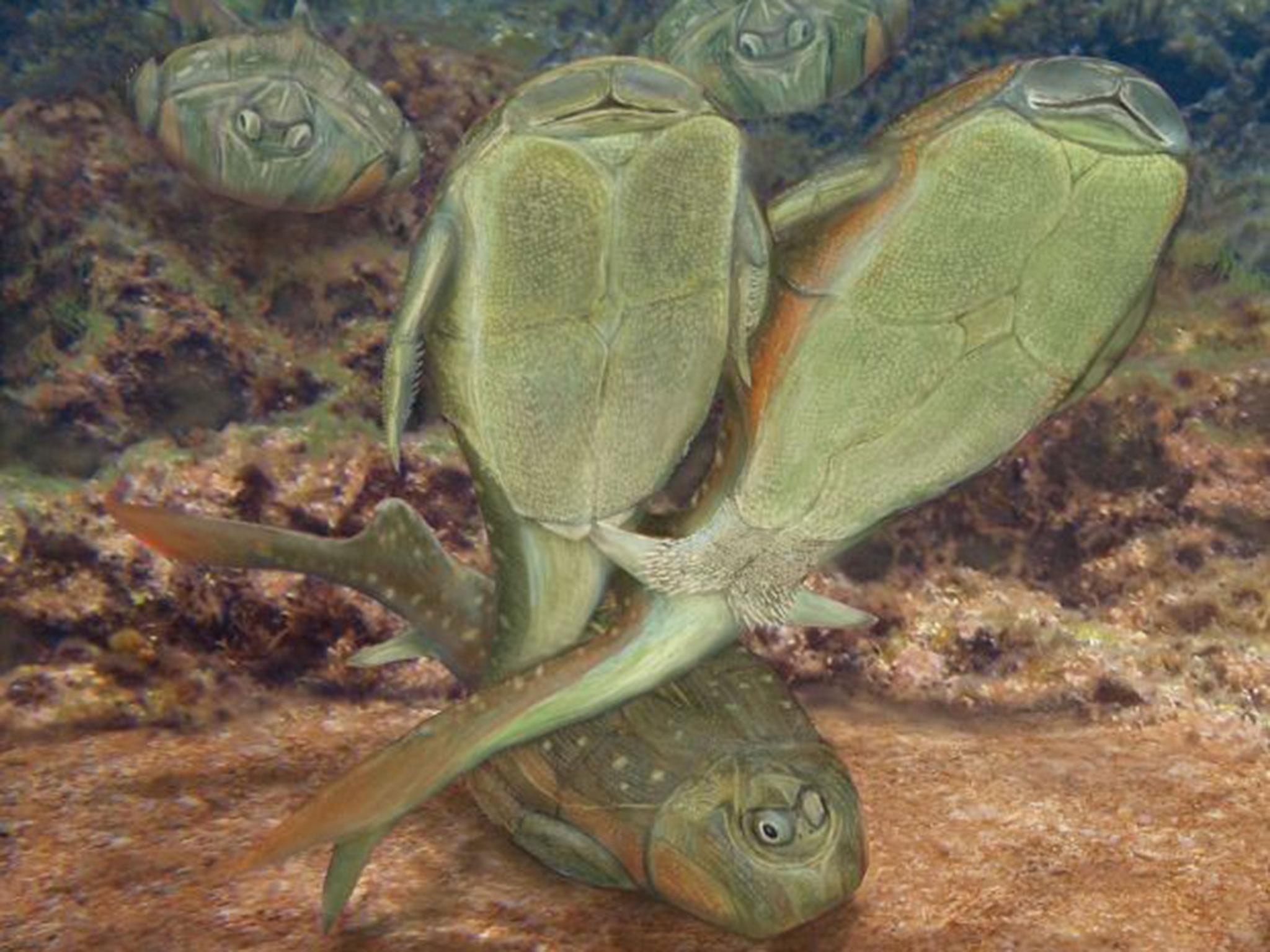 澳大利亚科学家最新研究表明,地球最早动物性交配行为出现于4.3亿年前。