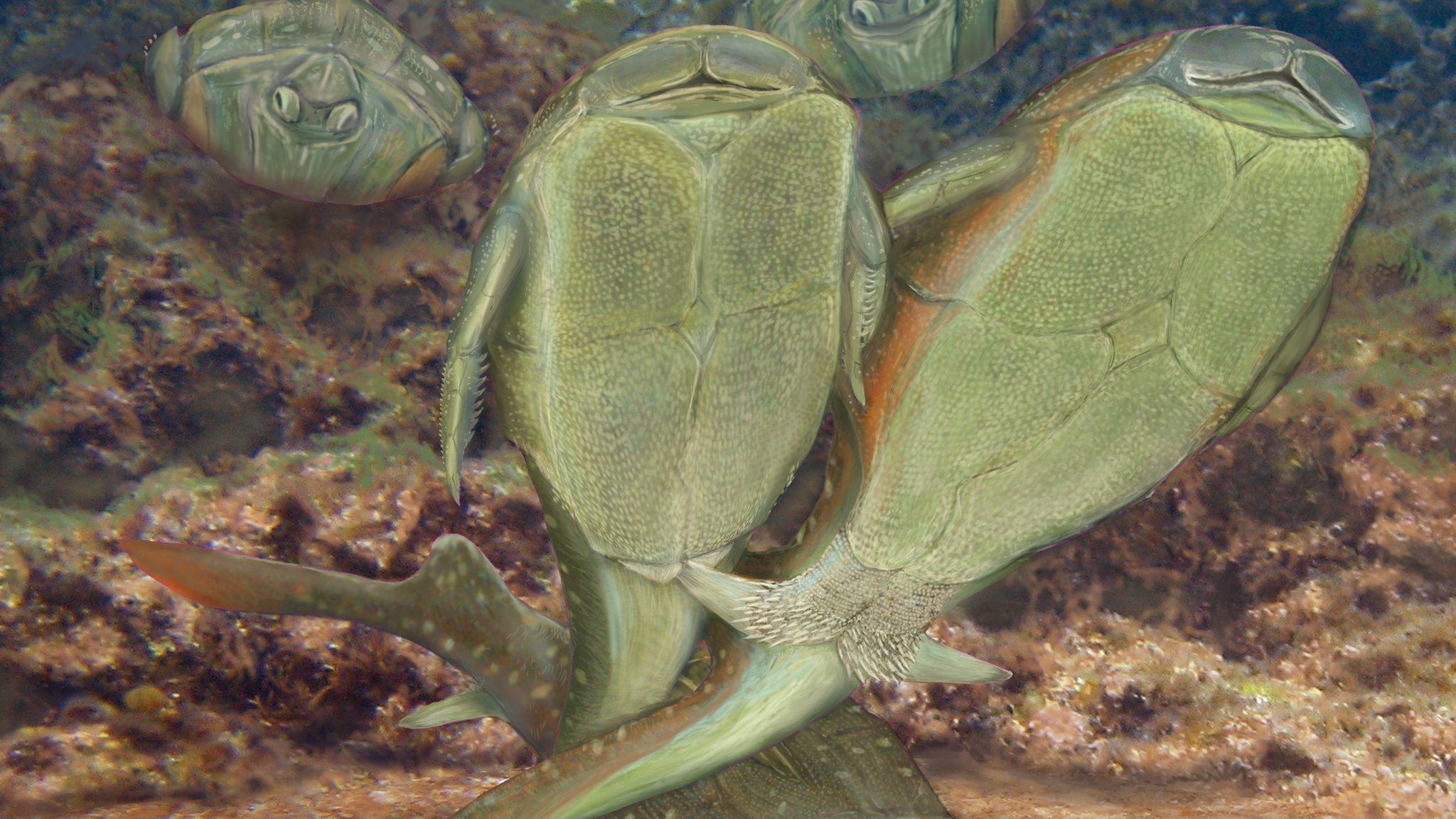 """由于一群""""不雅观""""的早已灭绝的盾皮鱼的出现,性的历史或许不得不改写。"""