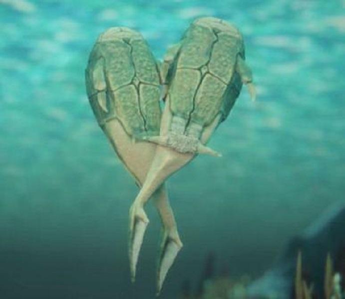 3.85亿年前盾皮鱼纲小肢鱼掌握了性交本领