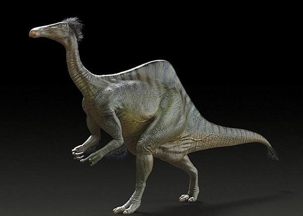 科学家形容奇异恐手龙傻里傻气