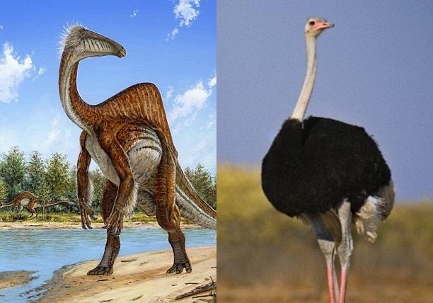 有指奇异恐手龙的形态跟鸵鸟类似