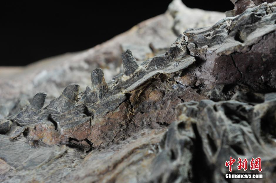 云南禄丰早侏罗世地层中发现的腔骨龙类恐龙新属种——禄丰盘古盗龙