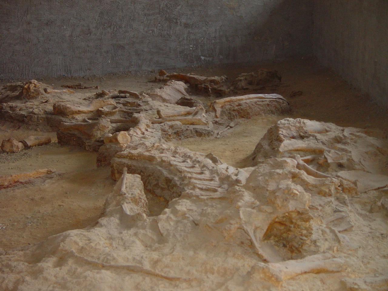 灵武清水营古生物化石遗址盗挖猖獗
