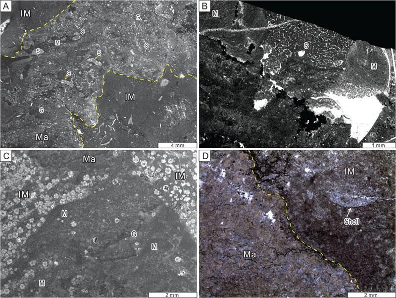 """图2. """"迷宫状""""海绵—微生物礁镜下特征(A)-(B)中含有大量海绵骨针(S)"""