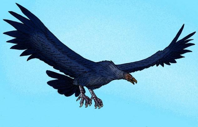 阿根廷巨鹰