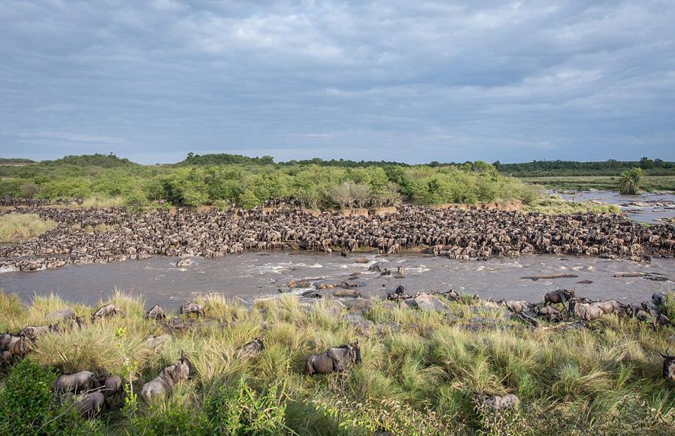在长达2个月近3000公里行程中,有2万只角马准备渡过马拉河。