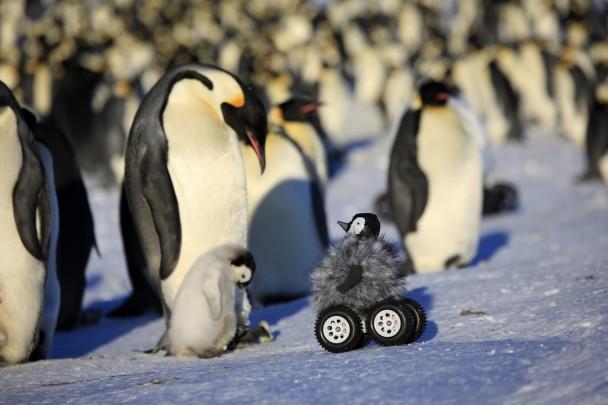 小企鹅机械人混入南极企鹅群
