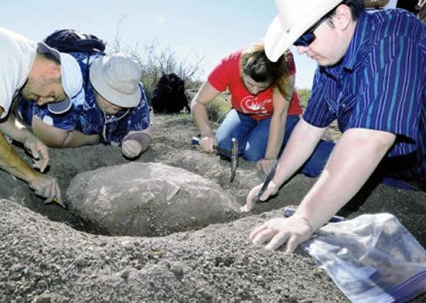 美国新墨西哥州发现9千万年前的海龟化石