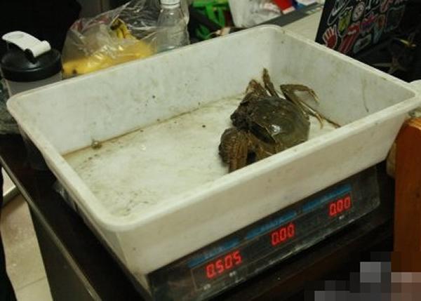 """""""巨蟹""""重达1斤。"""
