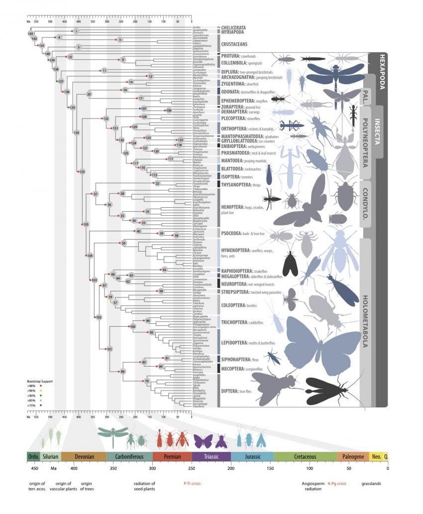 研究人员确定一个强有力的昆虫演化时间表