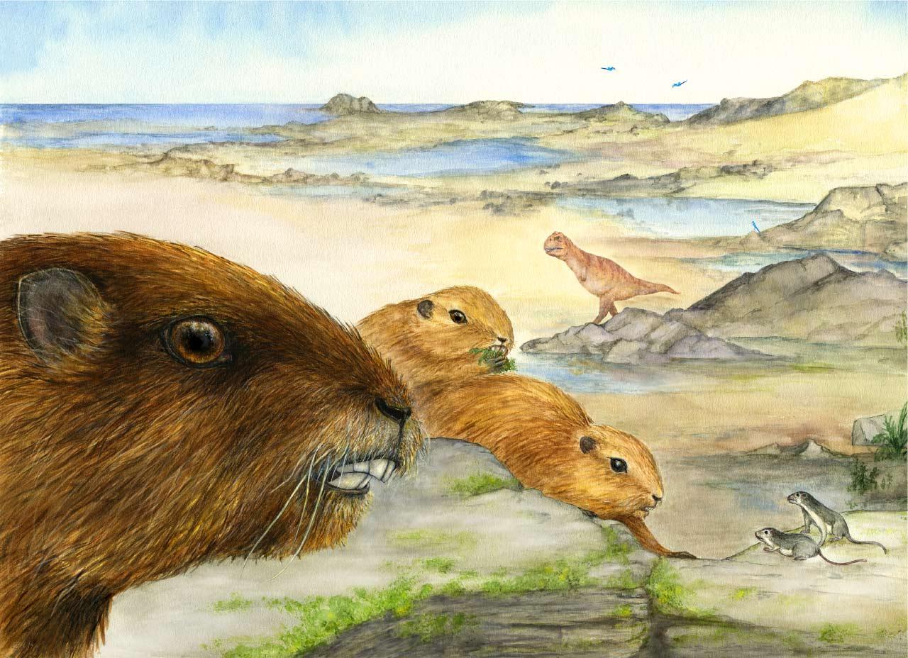 与恐龙同时代的体型第二大哺乳动物复原图