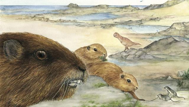 这种古老的哺乳动物与恐龙共同生活于6600万年到7200万年的冈瓦纳大陆上