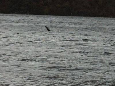 英国男子在尼斯湖西岸拍下疑水怪的不明物体