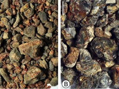 生物标志物揭示中国琥珀植物来源