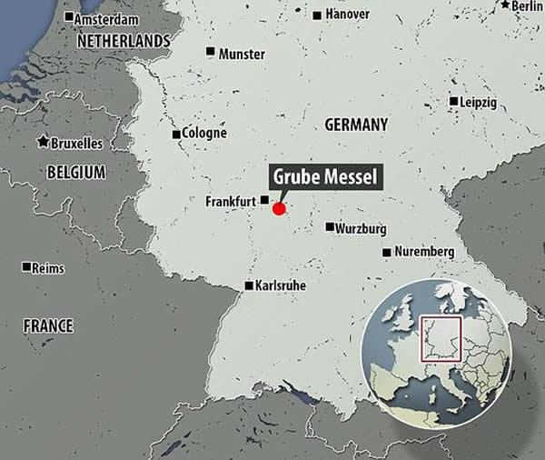 这个化石保存在德国法兰克福市达姆施塔特地区梅塞尔化石坑的油页岩中。
