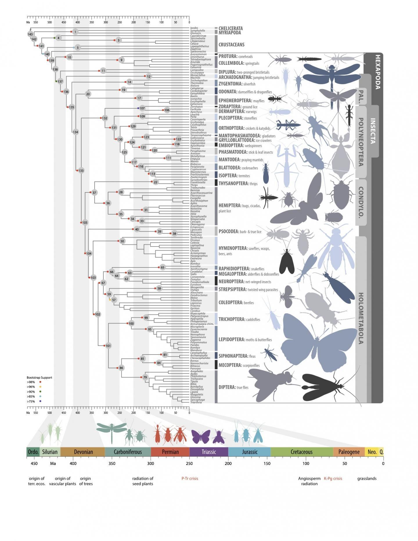 """由100多名科学家组成""""千种昆虫转录组进化""""研究联盟发布了第一张昆虫进化的现代路线图。"""