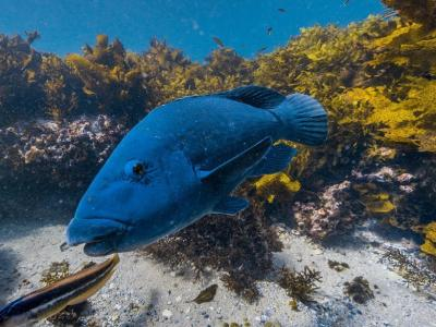 Google推出澳洲版海底街景 坐家中畅游大堡礁的珊瑚世界