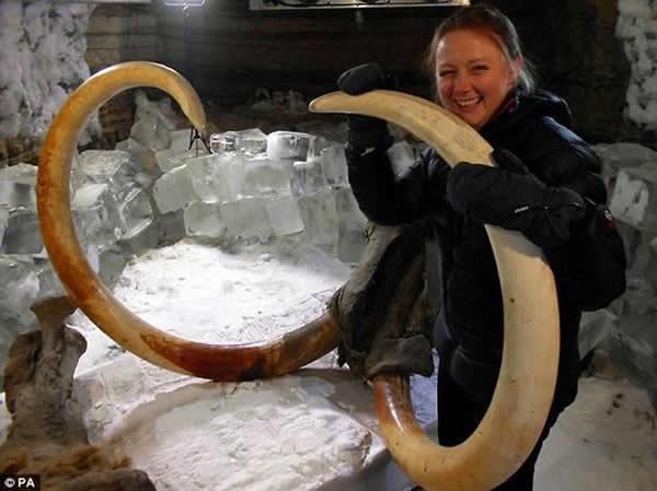 科学家在西伯利亚覆盖冰雪的荒地的冻结层中发现一具保存完好的猛犸象尸体。随后,他们希望复活这些早已灭绝的古老动物。