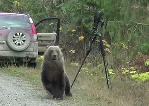研究了一会后,灰熊才转身离开躲回草丛。