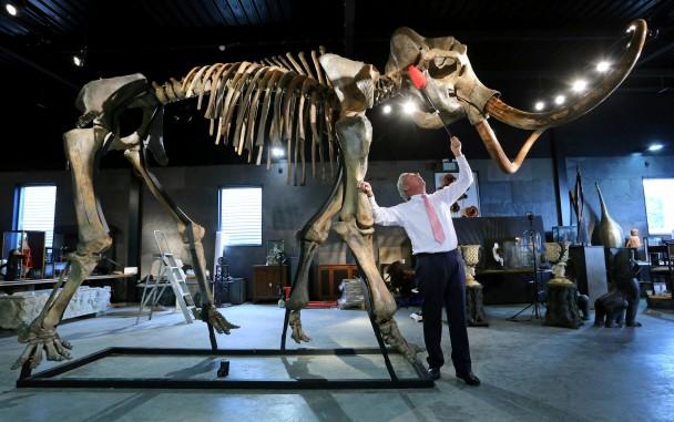 沉睡5万年冰河时期长毛象骸骨在英国拍卖18.9万镑成交
