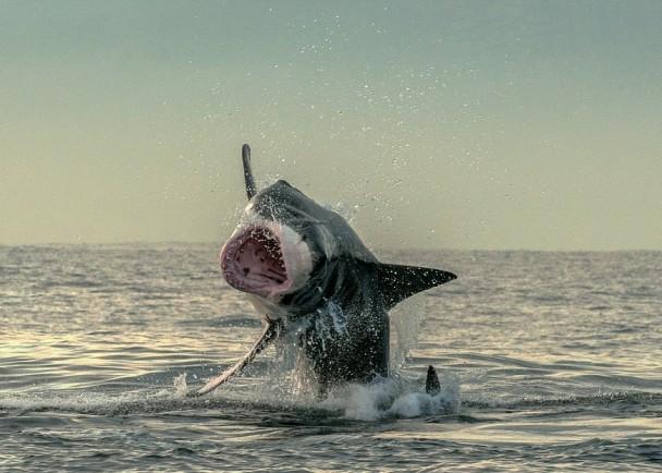 小海豹最终跌回水中。