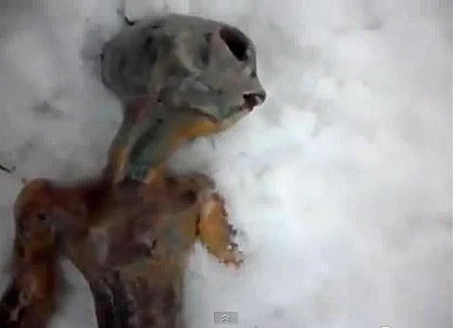 西伯利亚外星人