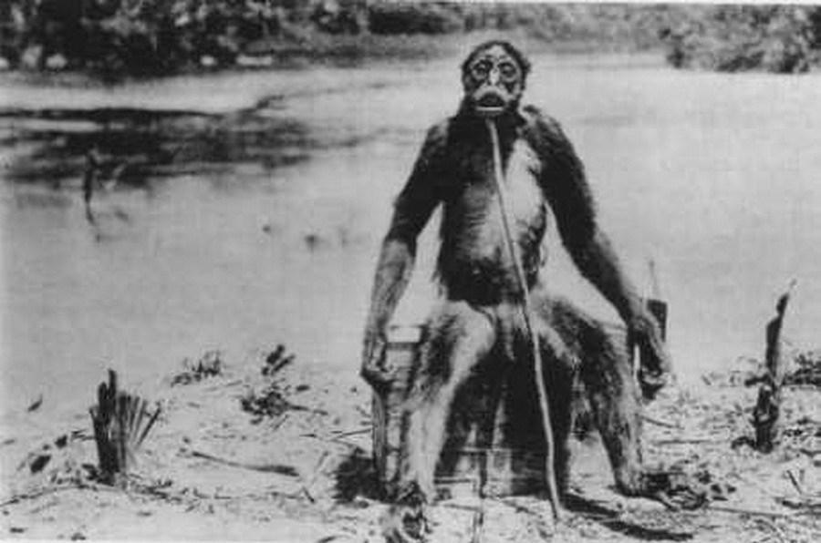德洛斯巨猿