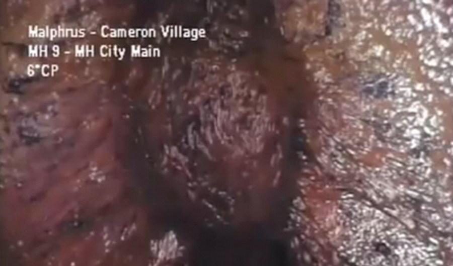 北卡罗莱纳州下水道怪兽