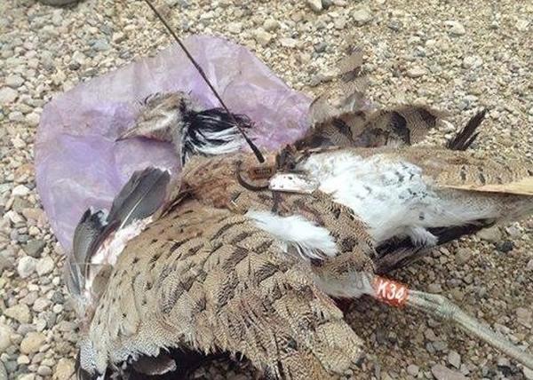 """这只""""自杀式""""袭击的雀鸟被警方击毙。"""