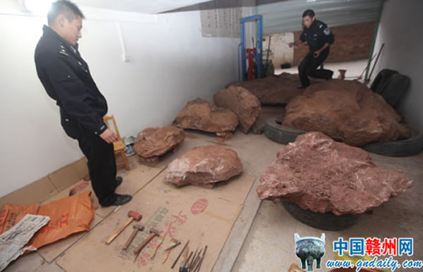 江西赣州在一出租房仓库里查获大量恐龙、巨型龟化石