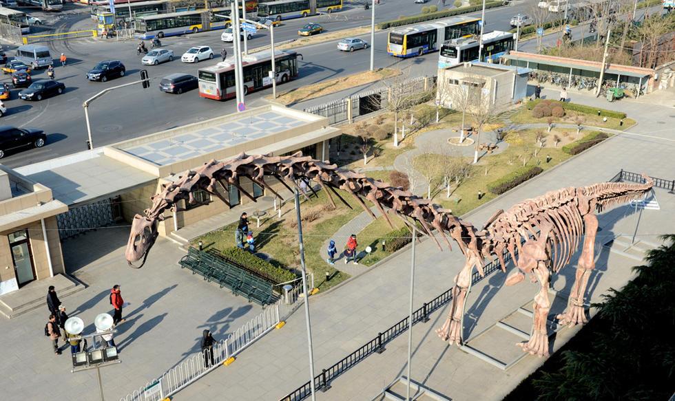 世界上最大的恐龙复原骨架巨型汝阳龙首次在北京自然博物馆亮相