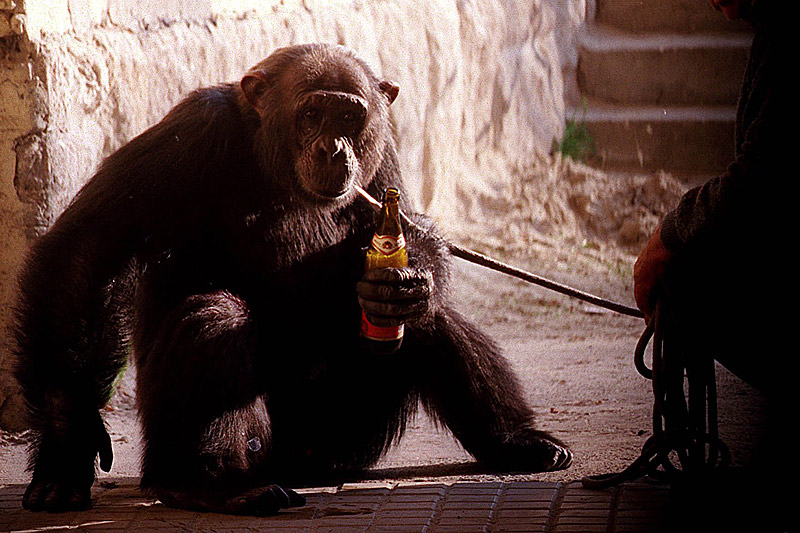 人类祖先或在一千万年前就开始饮酒